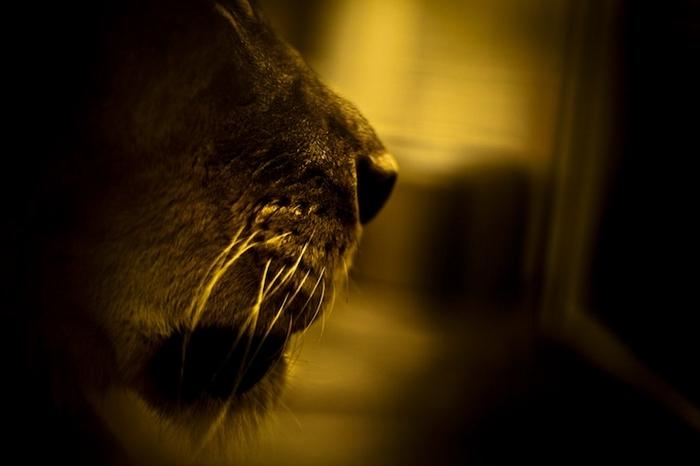 Фотографии диких животных от michael patrick