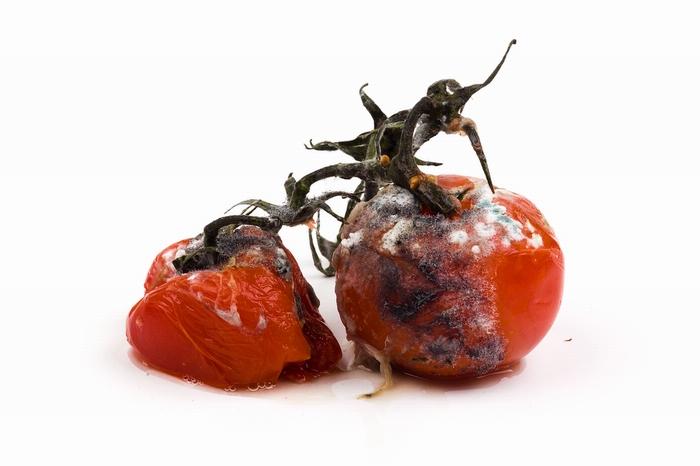 Заплесневелые помидоры на фото Joe Buglewitz