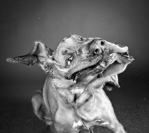 Carli Davidson, серия «Shakes»