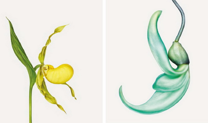 ����� ���������� �Flower� ����� ��������� (Andrew Zuckerman)