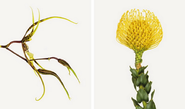 Серия фотографий «Flower» Эндрю Цукермана (Andrew Zuckerman)