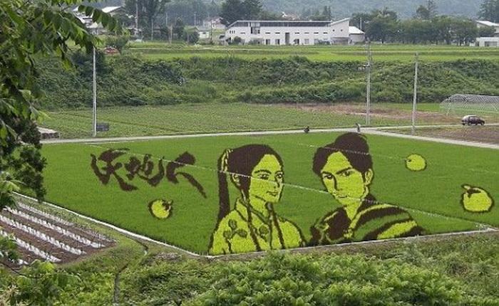 Удивительные рисунки на полях в Японии, выполненные из разноцветных саженцев риса