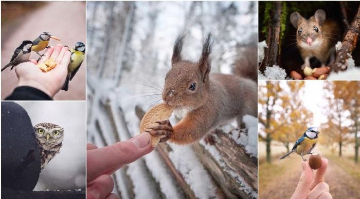 Милые снимки диких животных, живущих на просторах Финляндии.