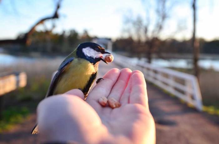 Лучше синица в руке, чем журавлю в небе.