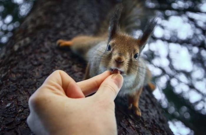 Белки - любимчики финского фотографа.