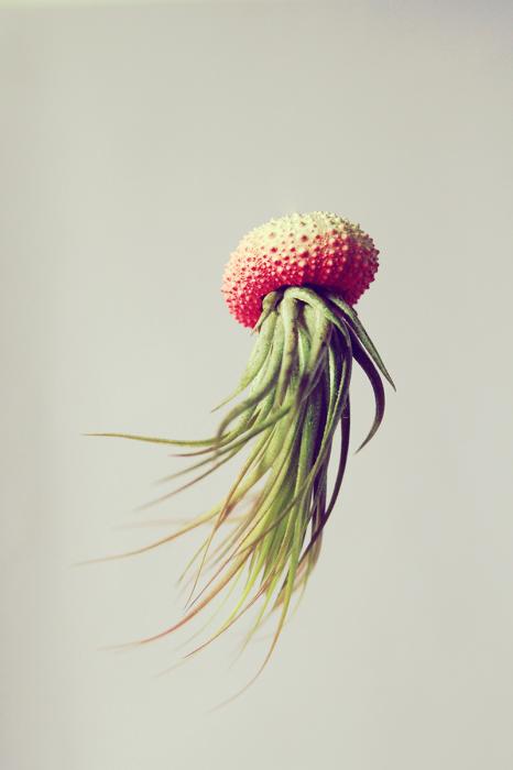 Растения в панцире морского ежа.
