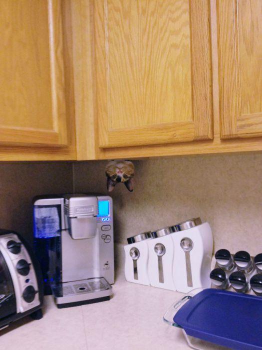 Кот-ниндзя тщательно следит за качеством приготовления кофе.