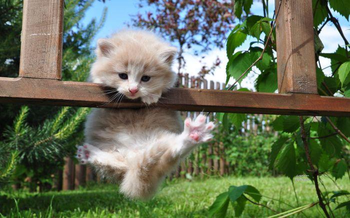 Турник для маленького кота-ниндзя.