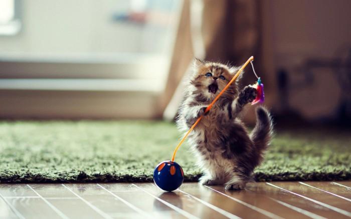 Кошачья игрушка - тайное оружие молодого кота-ниндзя.