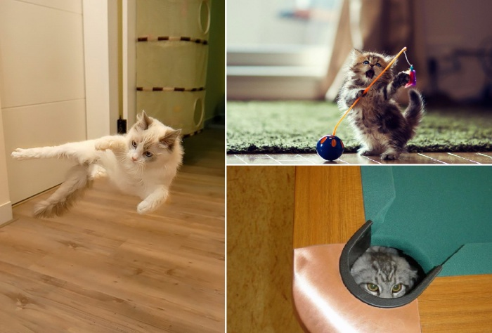 Приемы древнего искусства Ниндзюцу в исполнении домашних котов.