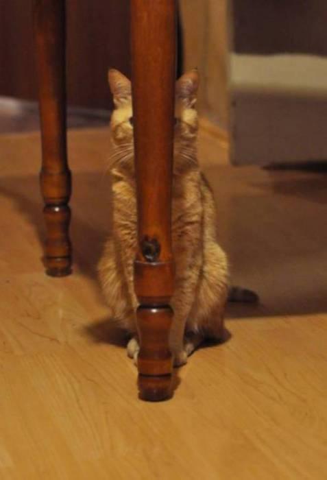 Животное прячется за ножкой стола.