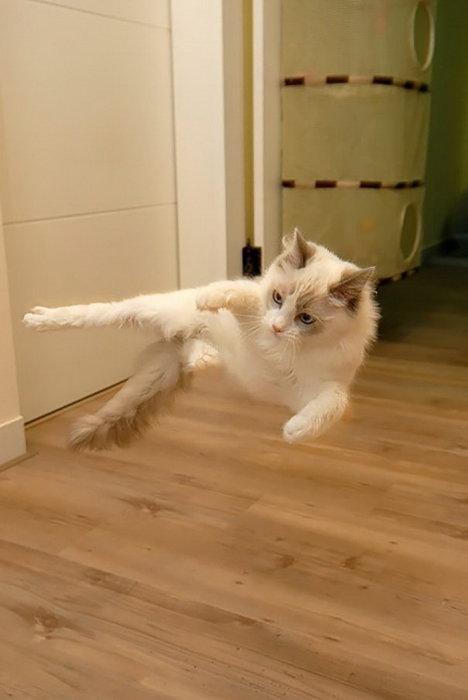 Ниндзя-кот никогда не упустит шанс потренироваться.