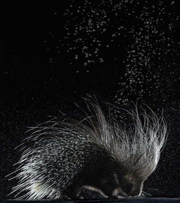 Холодный душ от Эйприл Мейсиборки (April Maciborka) и Дэвида Уайла (David Wile)
