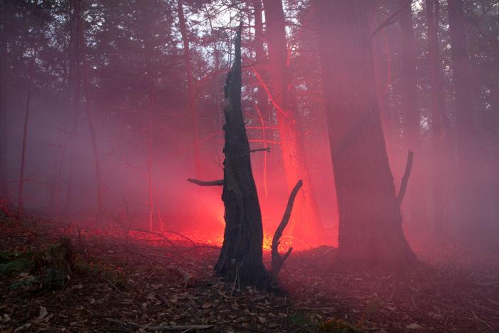 Творчество американского художника и фотографа Амелии Бауэр направлено на исследование современных представлений о мире природы