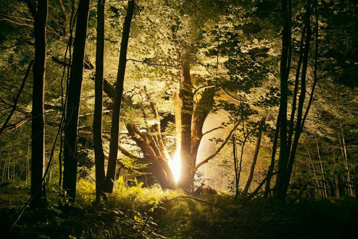 Работы американского фотографа Амелии Бауэр