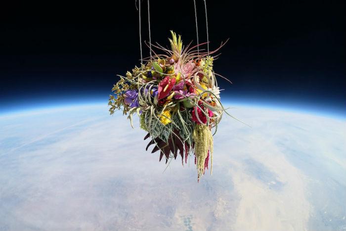 В рамках миссии в стратосферу были отправлены полувековая белая сосна бонсай  в коробе из углеводородного волокна и роскошный букет