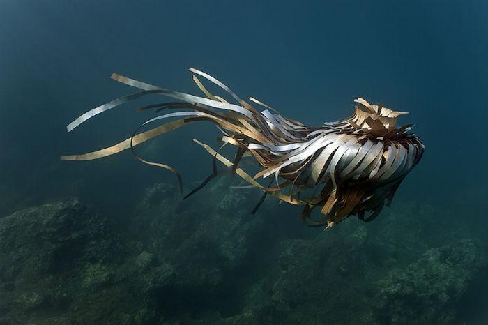 Художники из студии «Forlane 6 Studio» создают любопытные подводные инсталляции и подводные же скульптуры
