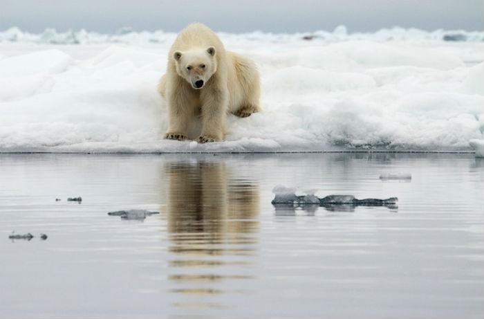 Прекрасная природа полярных регионов на фотографиях Камиллы Симен