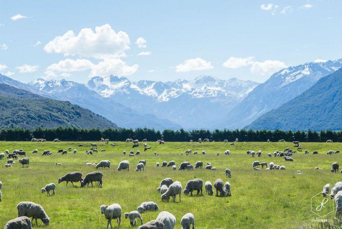 Потрясающая природа Новой Зеландии