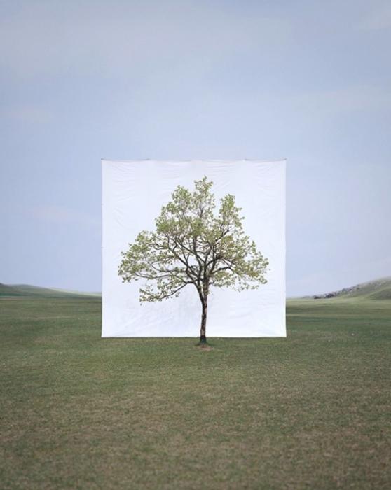 Cерия Tree фотографа Myoung Ho Lee