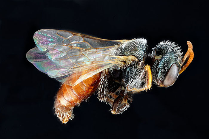 микромир пчелы в проекте Геологического управления США