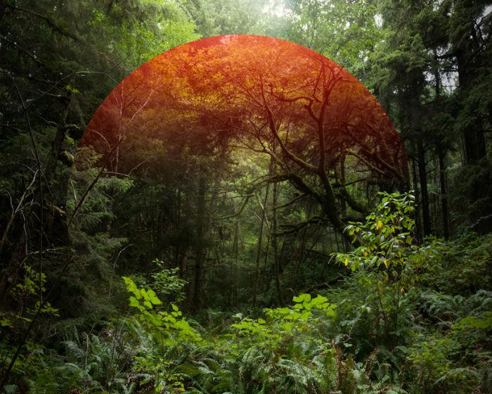 На каждом коллаже природа дополняется абстрактным цифровым изображением