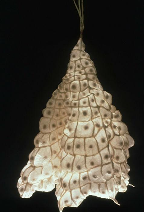 Увлечение Даррел создавать арт-объекты из кальки переросло в серьёзное ремесло