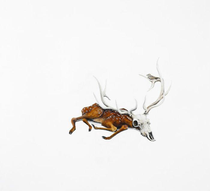 Дикая красота: изображение животного мира Северной Америки