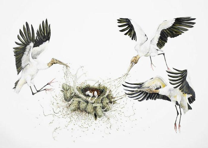 Животный мир Северной Америки в работах американского иллюстратора