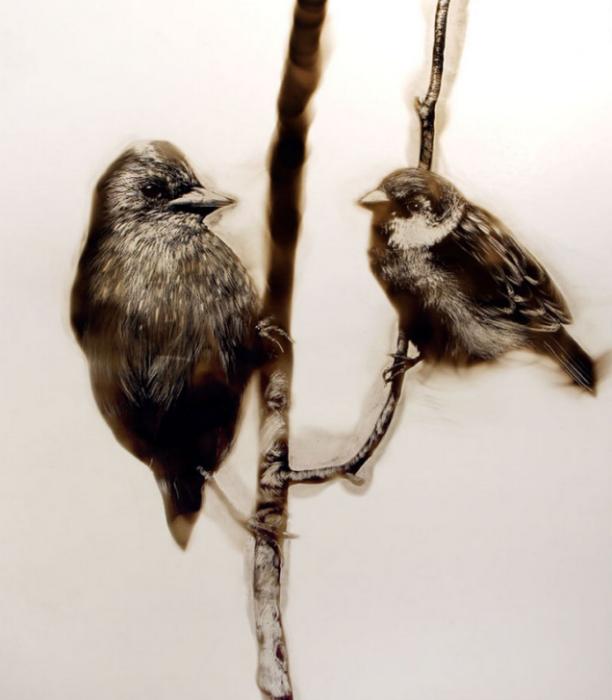 В последней серии своих картин, Bird series, Спазук даже использовал настоящие перья птиц для более детальной прорисовки пернатых