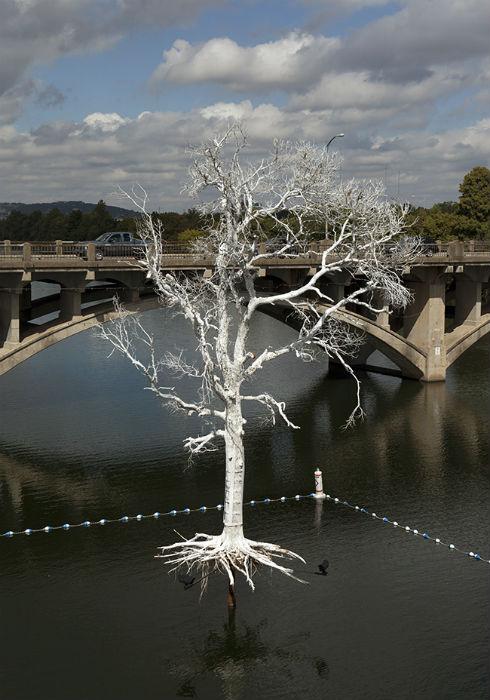 Посредством инсталляции Лю стремится привлечь внимание общественности к проблеме гибели многих сотен деревьев в Техасе по причине засухи