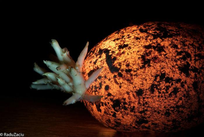 Светящиеся овощи и фрукиты в проекте румынского фотографа