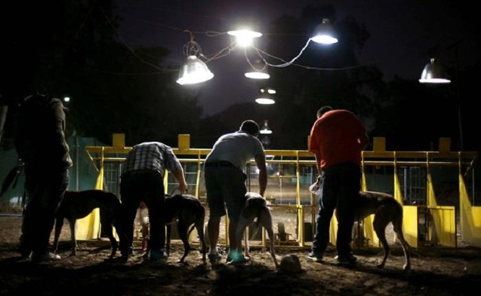 Владельцы со своими собаками перед забегом.