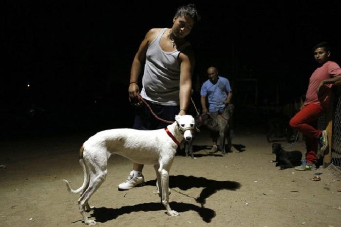 Собачьи бега в Сантьяго.