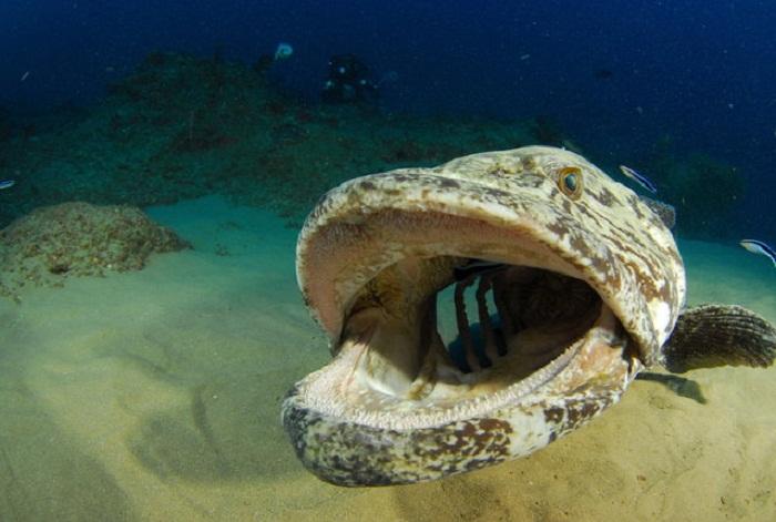 Лучшие подводные фотографии.