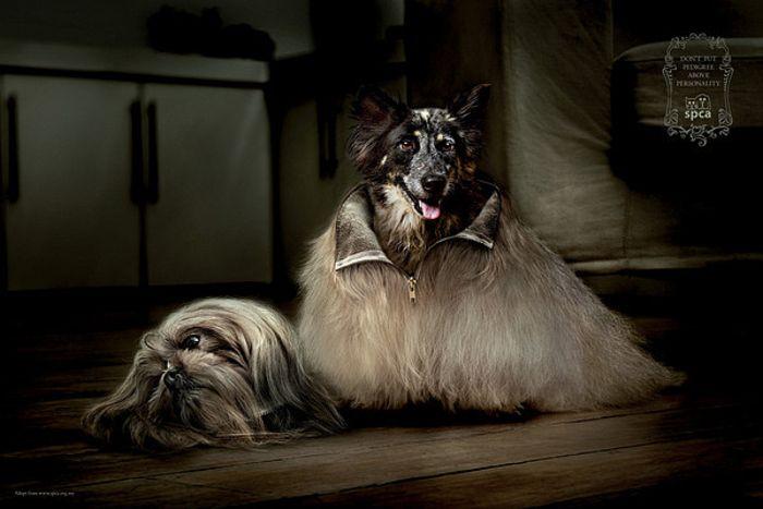 SPCA Costume от Общества защиты животных