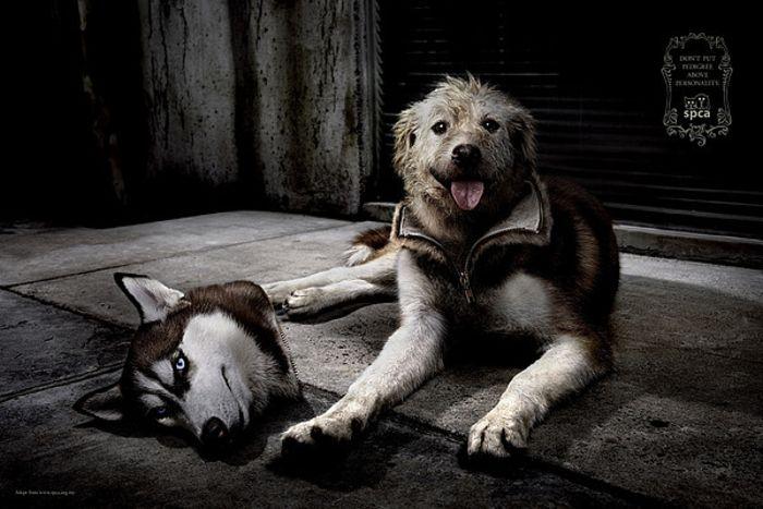Уникальный фотопроект SPCA Costume