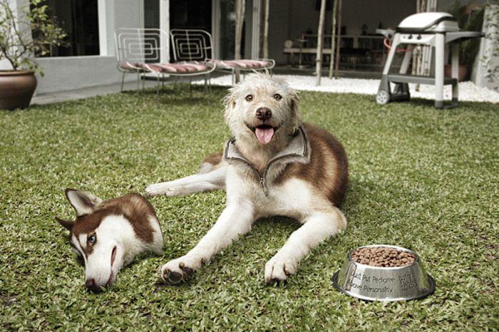 SPCA Costume: фотопроект от Общества защиты животных