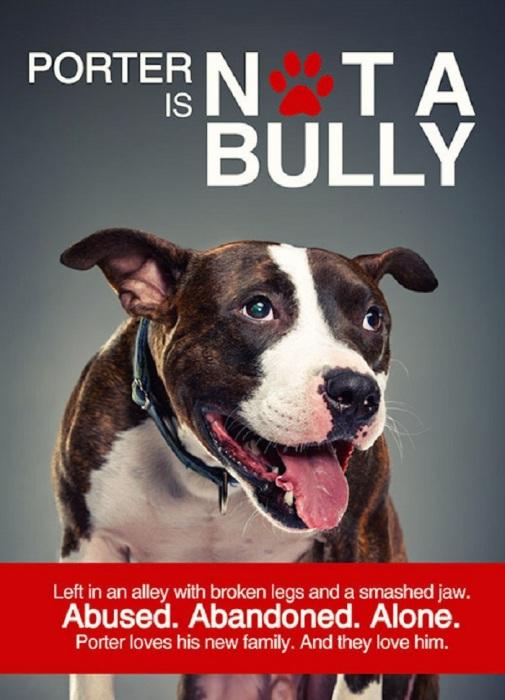 Коллекция Not a Bully.