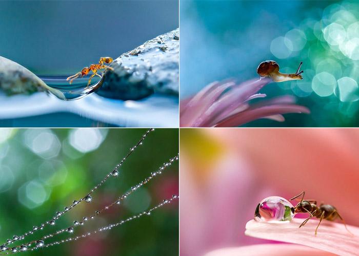 Макроснимки Miki Asai.