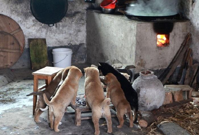 Замерзшие собаки