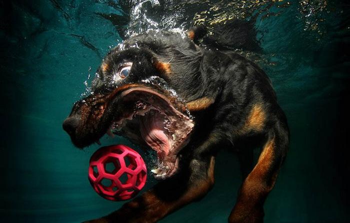 Underwater Dogs: коллекция фото собак под водой