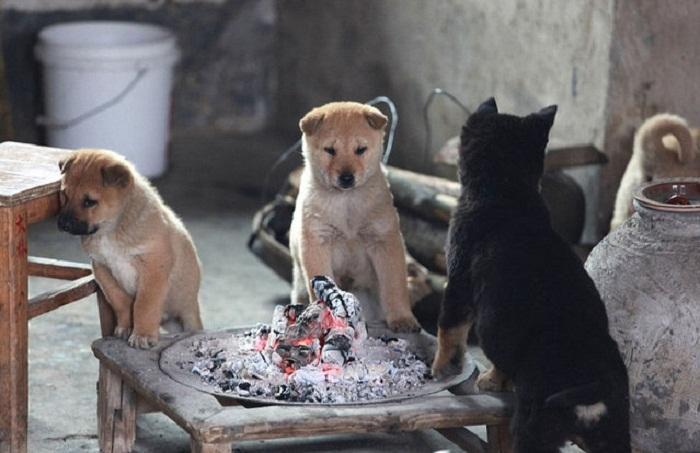 Собаки в Jiulongjiang Forest Park