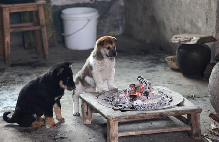 Собаки, греющиеся у костра