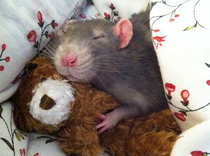 Крысята от Jessica Florence и Ellen van Deelen