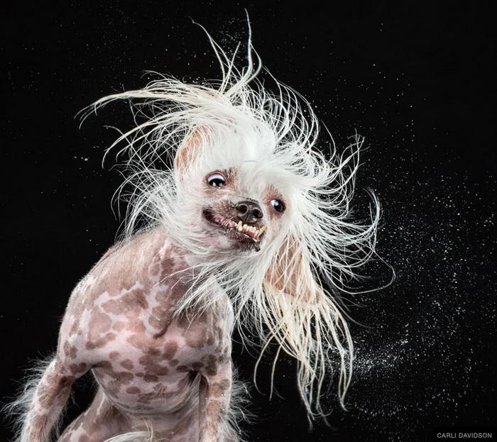 Собаки Carli Davidson