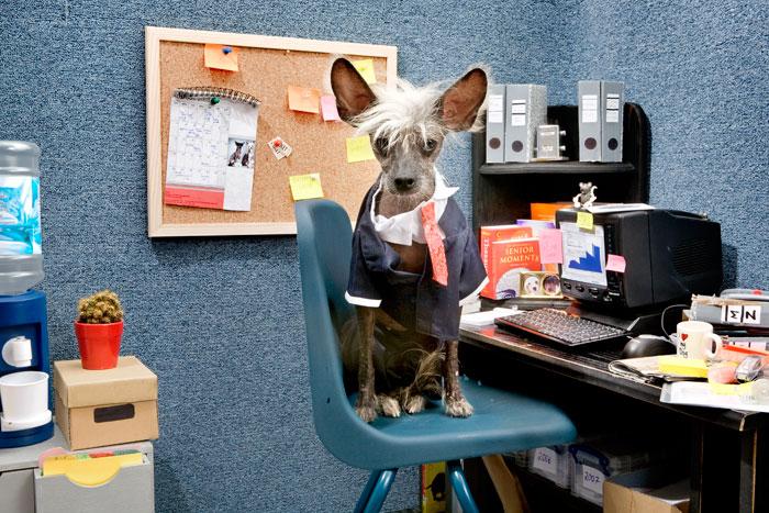 Чинни - офисный работник.