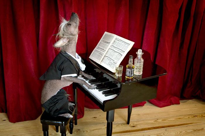 Чинни - пианист.