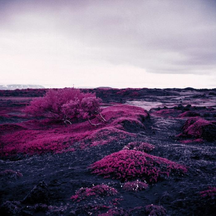 Инфракрасная Арктика от фотографа Daniel Zvereff.