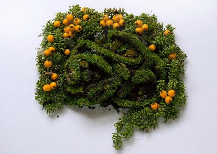 кишечник из растений